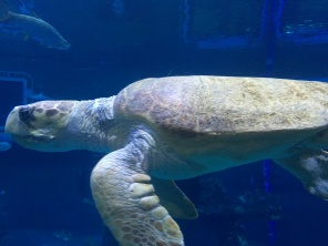 turtle-view_27920920132_o