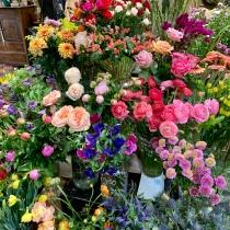 jean-talon-market_33794461418_o